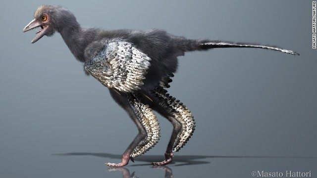 New dinosaur is a primitive bird