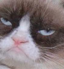 Grumpy Cat Goes From Meme To The Big Screen Cnn Com Video
