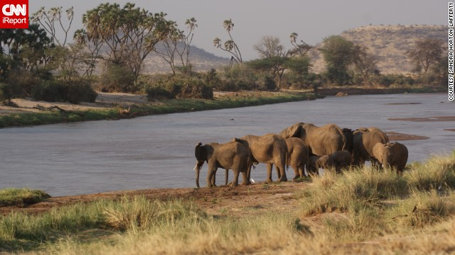 "Elephants enjoy a drink at Shaba National Reserve, where films like ""Out of Africa"" and ""Born Free"" were filmed."