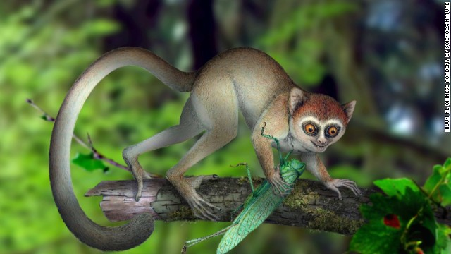 An artist's rendering shows what Archicebus achilles, which lived 55 million years ago, may have looked like in its natural habitat.