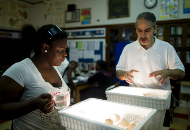 Incubating eggs is part of the curriculum at Catherine Ferguson.