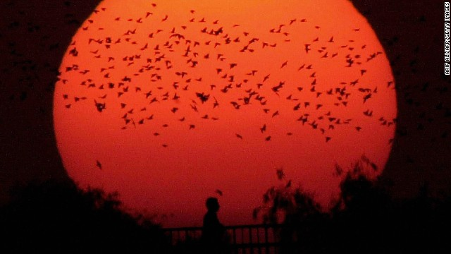 A flock of birds fly home as the sun sets ending the longest day of the year in Lahore, Pakistan.