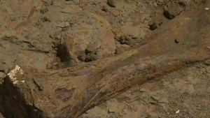 Treasure trove of prehistoric animal remains discovered ...