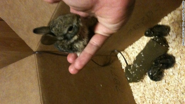 Feedings for the rabbits were scheduled during work breaks and in the middle of the night, Bisnar says.