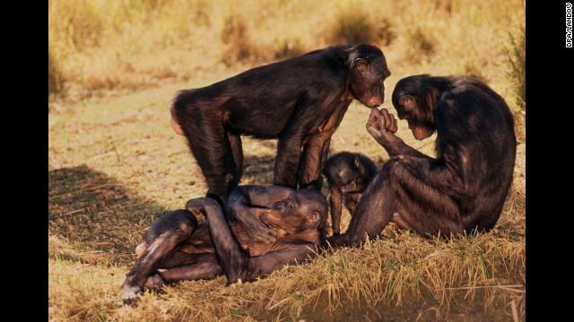 OPINIÓN: Asúmelo, ¡la monogamia es antinatural!  130620164616-03-animal-love-horizontal-gallery