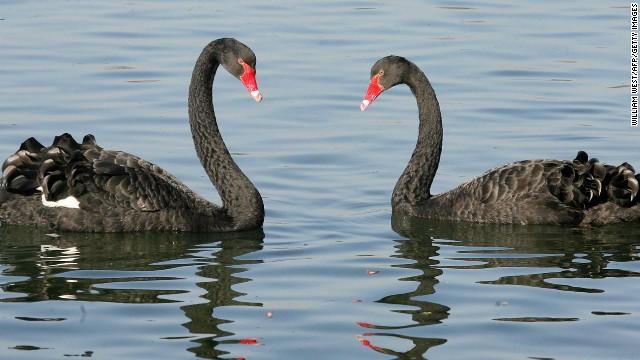 OPINIÓN: Asúmelo, ¡la monogamia es antinatural!  130620164622-05-animal-love-horizontal-gallery