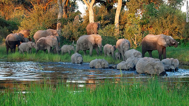 Far from major cities, Namibia's Caprivi Panhandle is a lush, scarcely populated region of swamps, floodplains and woodlands. The 450 animal species found here include herds of elephants that have doubled their population over the past decade, to an estimated 16,000. The region is bordered by communal conservancies.