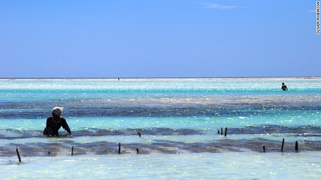 Seaweed is farmed and harvested off the southern and eastern coasts of Zanzibar. It's sold to a local factory just outside Stone Town where it's used to make soaps, creams and treatment scrubs.