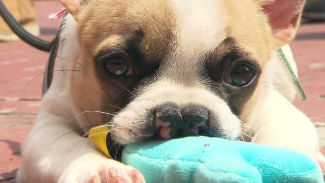 Lentil, el cachorro que hace recordar lo bueno de ser distinto