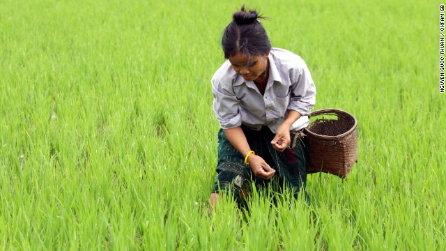 A rice farmer tends the fields in Vietnam. Oxfam cites the country as an 'exceptional model' of what smallholder farming can achieve