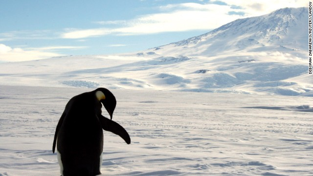 An emperor penguin cleans itself on snow-covered sea ice around the base of Mount Erebus in Antarctica. This volcano is not particularly welcoming to humans, but volcanologist Williams would love to visit.