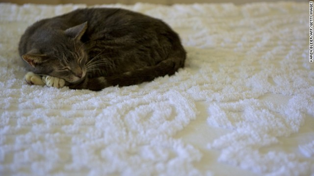 Weird science: Kitty litter increases risk of suicide?