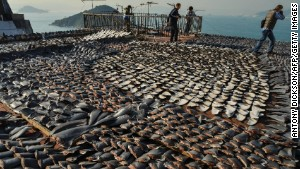 Shark fins dry in the sun on the roof of a factor in Hong Kong, one of the world\'s biggest markets for shark fins.