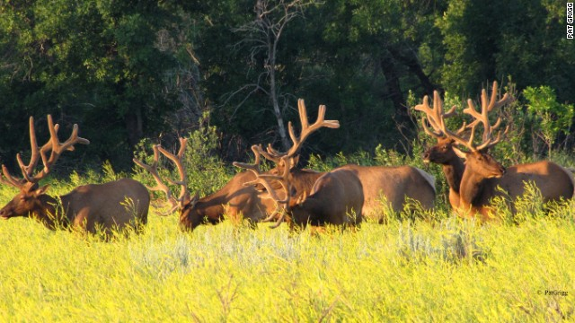 Elk are a common sight in the park's 70,000-plus acres.