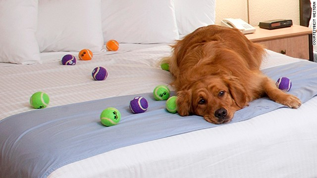 Unlimited free dog treats available from the reception area at this Niagara Falls, Canada, hotel, along with 24-hour dog-sitting service, a list of local veterinarians and grooming parlors.