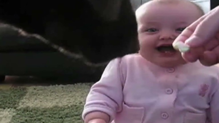 distraction baby laughs hysterically at dog cnncom video