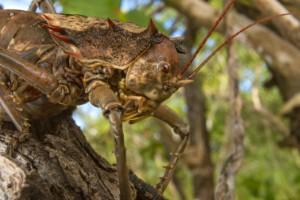 La vida silvestre de Gorongosa