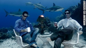 One gulp: Freedivers sip coffee with sharks