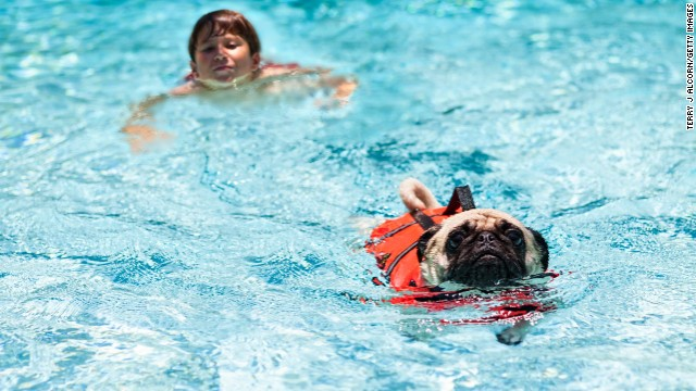 Swimming is fun for some dogs, but dogs can exhaust themselves struggling to climb steps or pull themselves out of the pool.