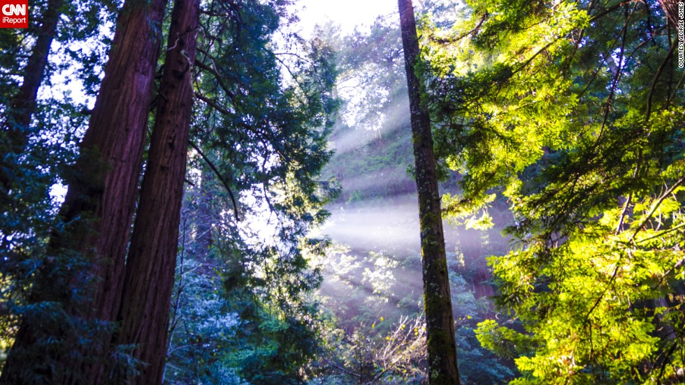 Monumento Nacional Muir Woods, California