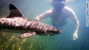 Bali Sharks runs a nursery for young sharks that have been saved from the shark fin trade.