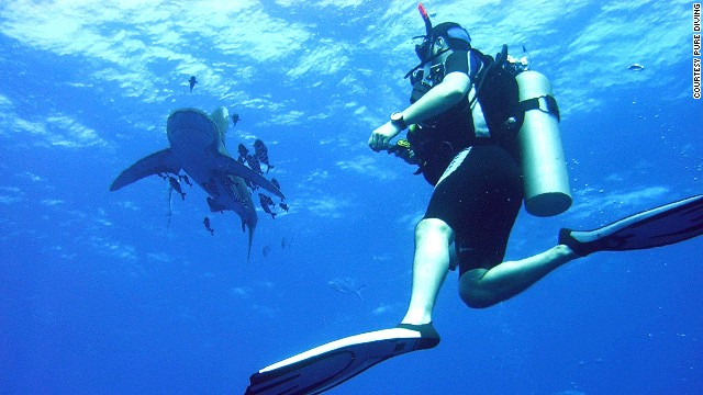 The Red Sea is one of the best places to observe oceanic white tips and snaggletooth sharks.