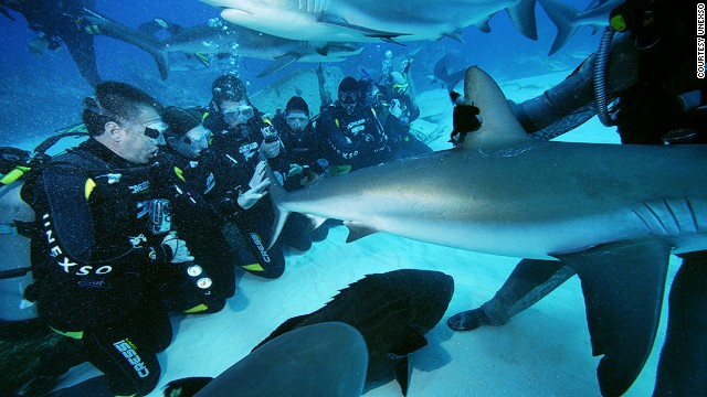 The Underwater Explorers Society (UNEXSO) conducts shark feeder courses.