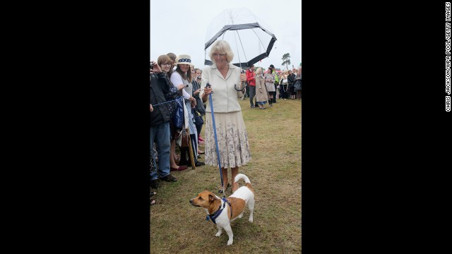 One lucky Jack Russell terrier attended the annual Sandringham Flower Show in King's Lynn, England, and met Camilla, Duchess of Cornwall.