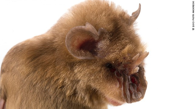 'Chewbacca bat,' stinky beetles and other bizarre species - CNN.com