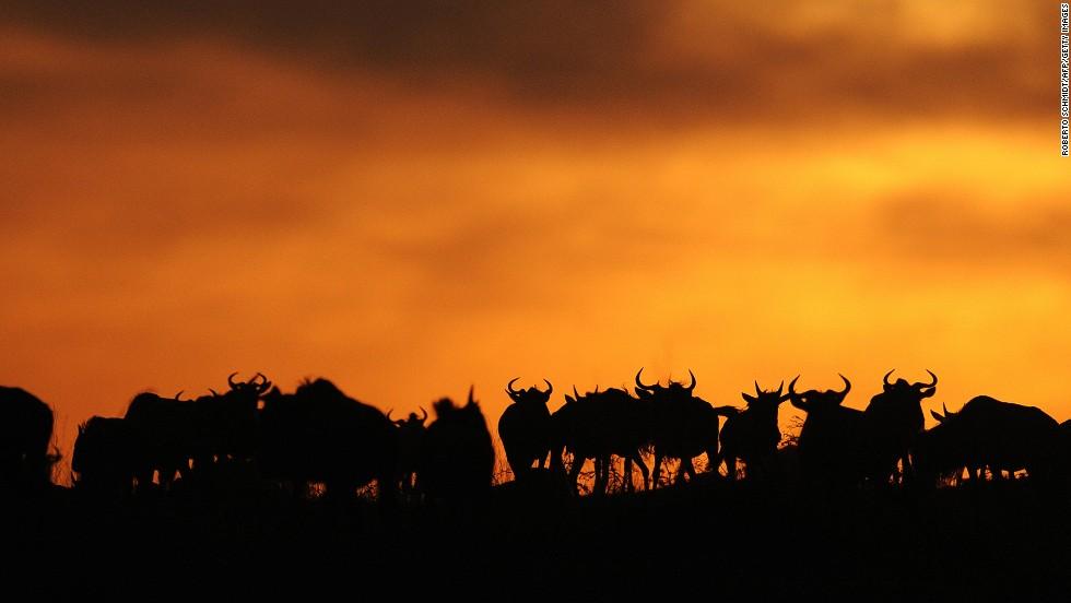Reserva Natural Masái Mara, Kenia