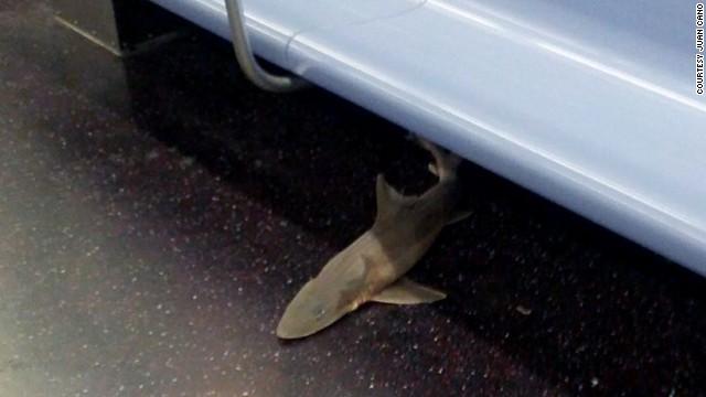 ¡Un tiburón en el metro de Nueva York!
