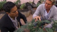 Dr. Sanjay Gupta changes his mind on weed