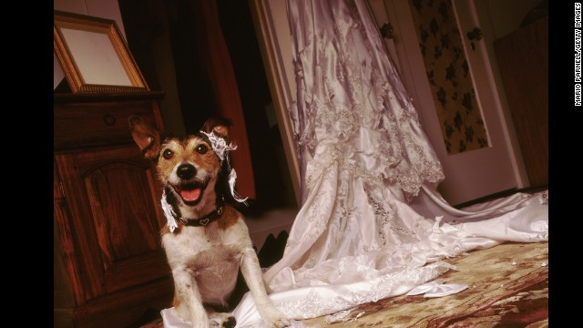 Most owners -- despite how much they love their pets -- will cop to their dog being too rambunctious to be part of the wedding ceremony.