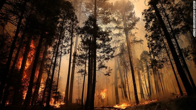 Flames from the Rim Fire destroy trees on Sunday, August 25, near Groveland, California. The fire had consumed nearly 219,000 acres as of Saturday, August 31.