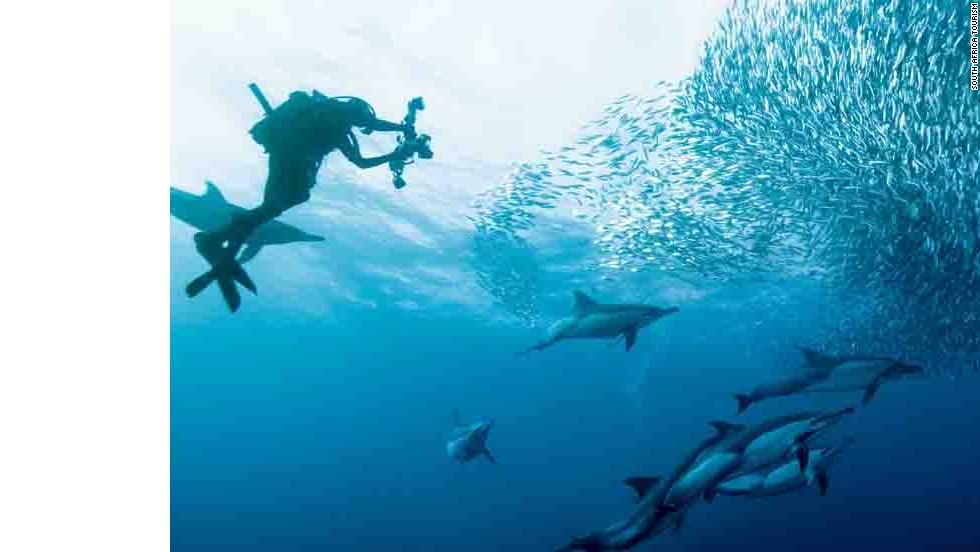 """""""La corrida de las sardinas"""", Sudáfrica"""