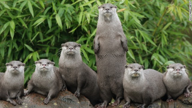 Jim was always the first otter picked for the basketball team because of his ability to stand on two legs.