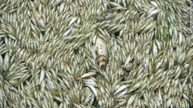 Authorities have cleared about 110 tons of dead fish from the river.