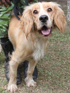 "Lumi, a highly energetic cocker spaniel, is ""absolutely perfect for the job,"" according to his trainer Louise Wilson, of Wagtail UK. ""He is very enthusiastic -- you could say to the point of obsessive -- for a tennis ball."" Once they make a find, the dogs are given a ball as a reward."