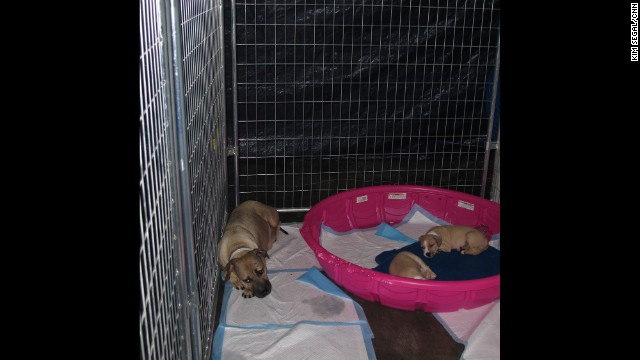 Shelter workers have identified six pregnant dogs, but based on experience they expect to find anywhere between five to 10 more to be pregnant.