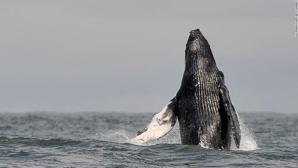 Una ballena del momento