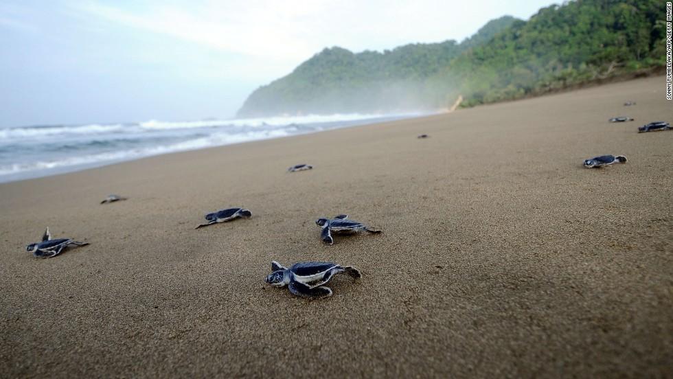 Observación de tortugas marinas
