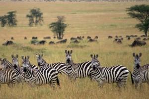 Parque Nacional Serengeti, Tanzania