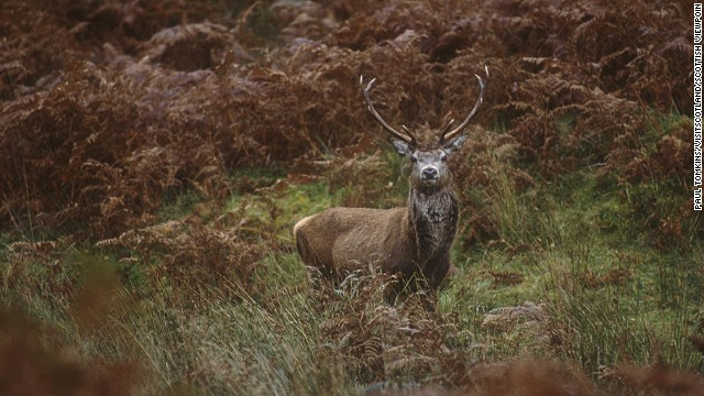 The Isle of Islay is one of Scotland's top places to see red deer stags fighting over territory with their antlers. Oh, and you might spot dancing March hares, too.