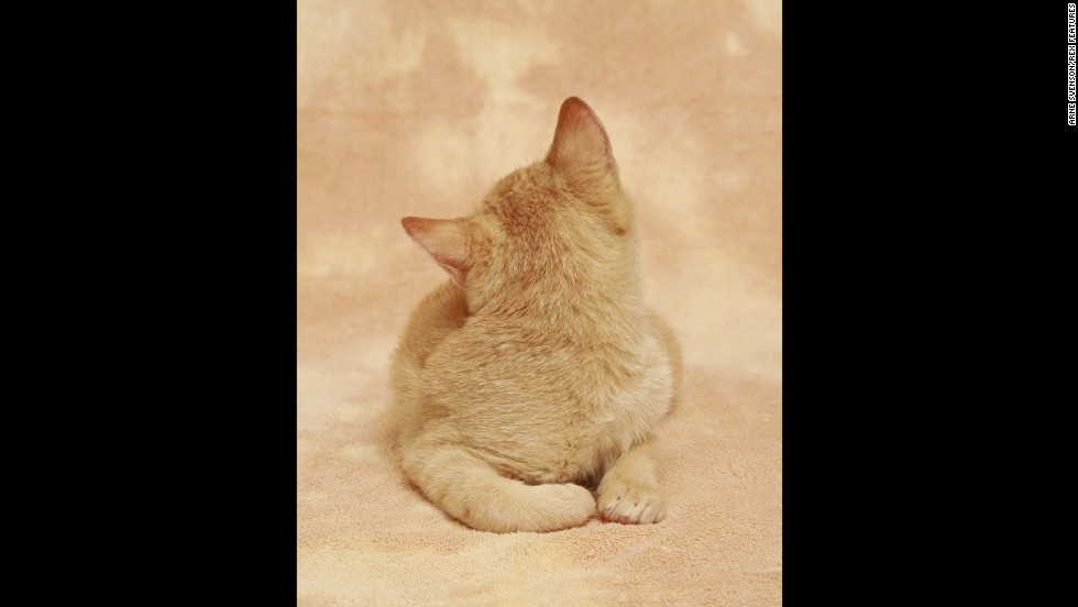 "Photographer <a href='http://arnesvenson.com/main.html' target='_blank'>Arne Svenson</a> has put together a charming yet unusual calender-style gallery of kittens called ""Strays."""