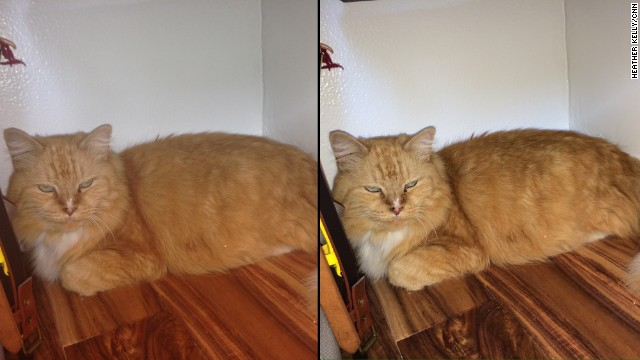 You see a similar difference when the flash is used to take photos of this cat. The iPhone 5 image, left, looks flat and muted, while the 5S shot on the right has more texture and depth.