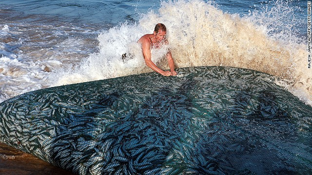 The sardine run along South Africa's east coast is an annual event attracting thousands of locals and tourists. Each year massive shoals of sardines stretching hundreds of miles draw sharks, dolphins and gannets hovering above the fish.