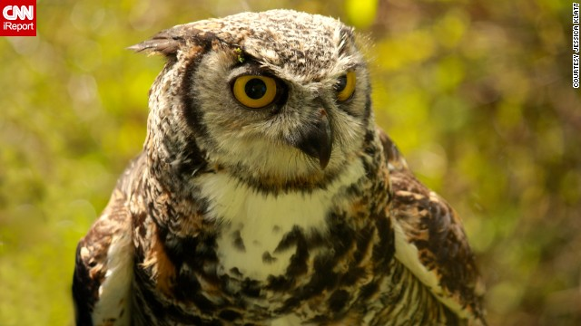 Jessica Klatt met this owl, named Spock, at Vancouver Island's The Raptors Center, which works for the conservation of birds of prey.