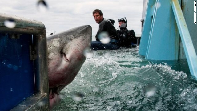 """When I'm in the water and see a shark, I can keep my fear completely under control, which helps me because they feel your heart beat, your sweat,"" said McBride."