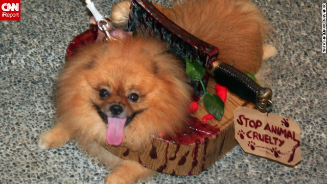 Gory special effects need not be reserved for human costumes. Navarro's Pomeranian, Jacks, somehow looks <a href='http://ireport.cnn.com/docs/DOC-870763'>scary and adorable</a> while wearing a meat cleaver -- and a message to stop animal cruelty.