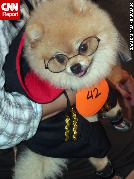 "This Pomeranian arrived at the Scaredy Cats and Dogs Walk in the Philippines as the boy wizard ""<a href='http://ireport.cnn.com/docs/DOC-870763'>Hairy Potter</a>."""
